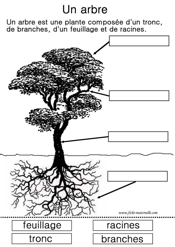 Science : étude d'un arbre (4 et 5 ans)