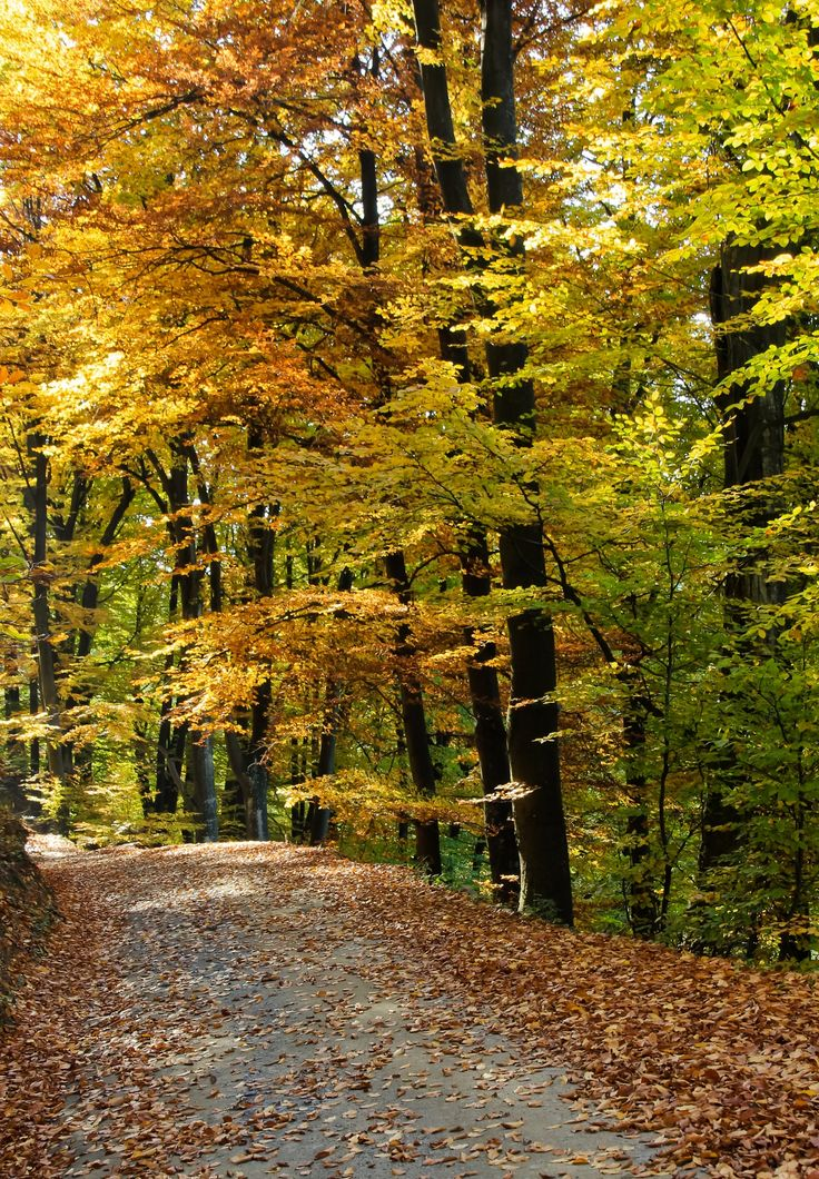 The autumn - A road through the forest. A beautiful fall.