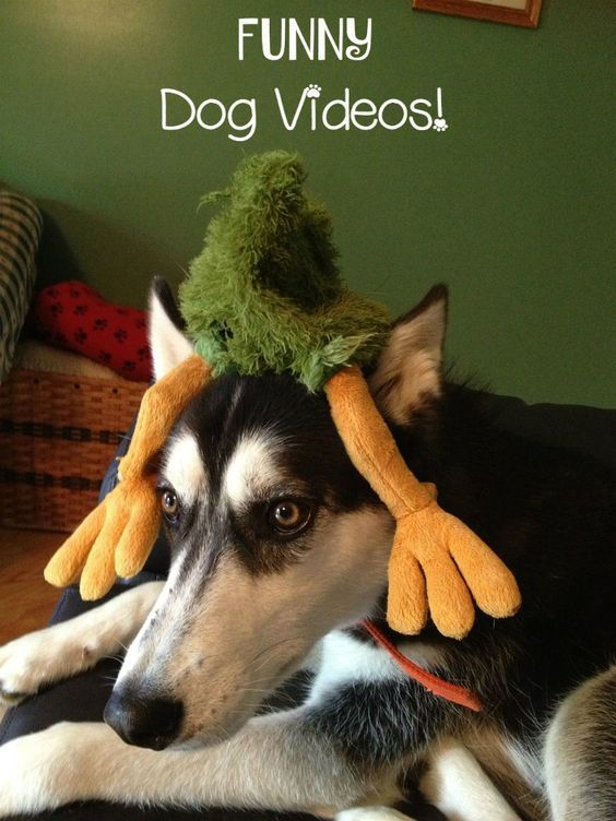Love funny dog videos? Even better, how about dogs & babies? These 5 videos will have you ROTFL in no time! Check them out!