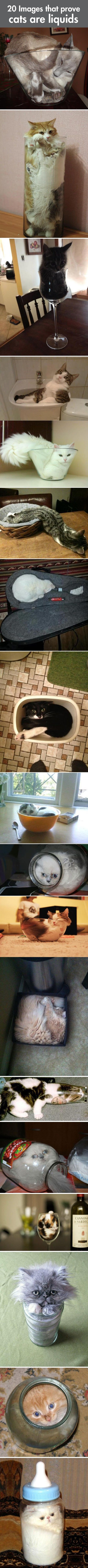 Definitive Proof That Cats Are Basically Liquids...