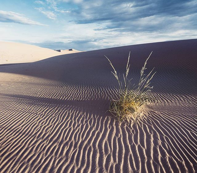 #Mongolia пустыня Гоби на рассвете. Я хорошо запомнил то свежее утро, когда идешь по мельчайшему белоснежному песку. Он успел остыть за ночь и теперь уставшие ноги ласкают миллионы холодных песчинок...