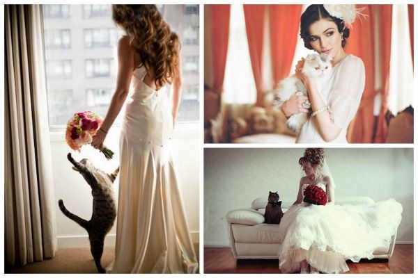 Google Image Result for http://tahoeunveiled.com/wordpress/wp-content/uploads/2012/06/Cats-at-Weddings.jpg