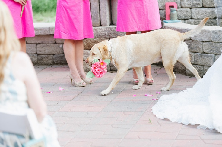 I have never seen one so well trained but a dog flower girl would be awesome
