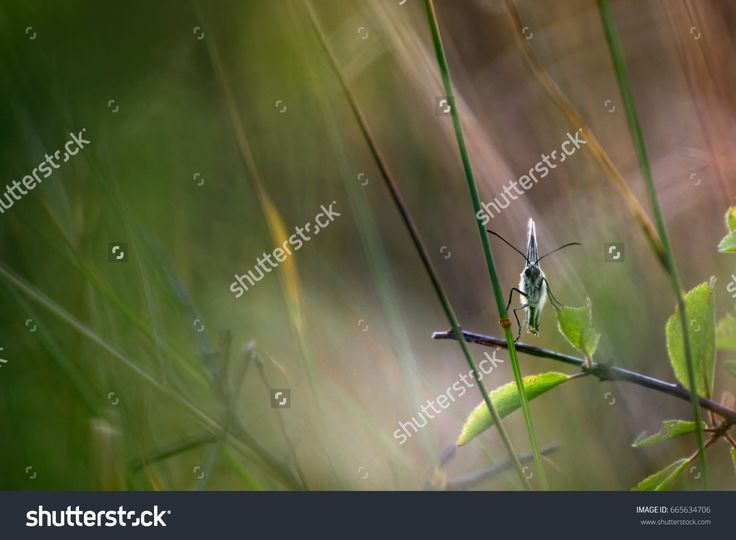 Beautiful Butterfly on Grass with Blurred Soft Background