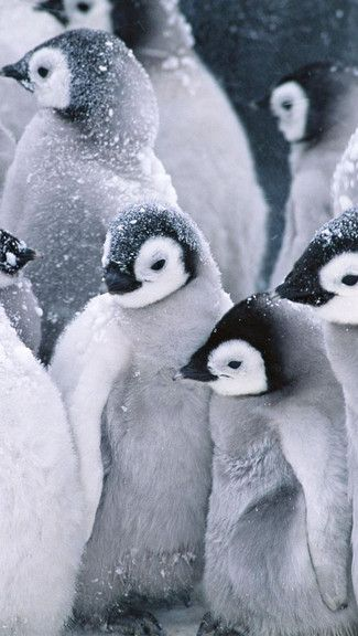 Marching Pinguins