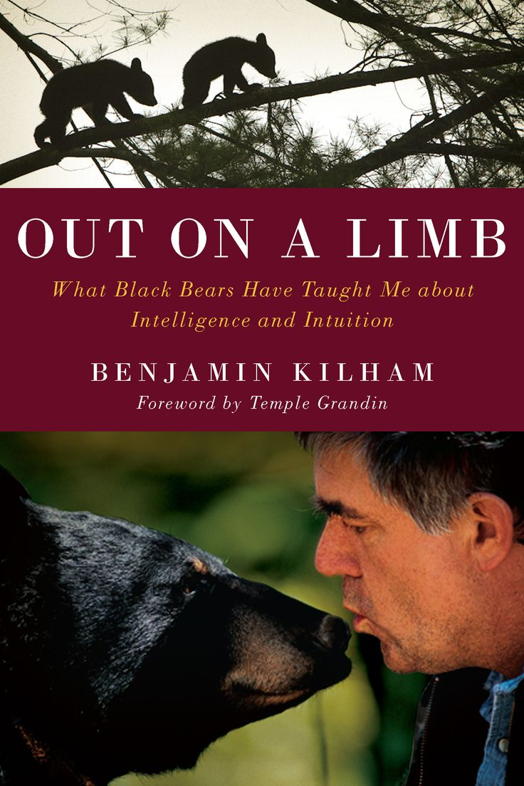 Out on a Limb: What Black Bears Have Taught Me about Intelligence and Intuition, Benjamin Kilham, Foreword by Temple Grandin
