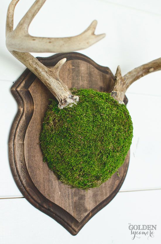 DIY Mossy Antler Mount - The Golden Sycamore