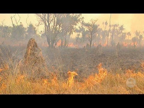 Aboriginal wetland burning in Kakadu (2005) - YouTube