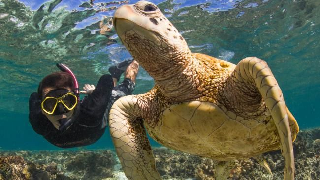 Underwater adventures: Six reasons why you don't need to leave Australia to see some of the best marine life on the planet #underthesea #holiday #water #marinelife #travel
