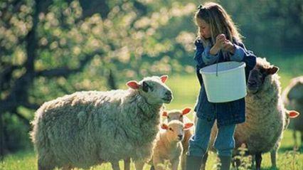 Best Family Farm Stays from Sydney