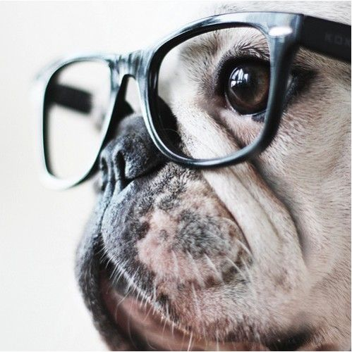 Hipster (even though this is probably a french bulldog its still good in my book)
