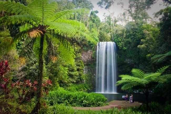 Rainforest Australia - Daintree Rainforest - Wet Tropics - A World Heritage Park - Daintree Village