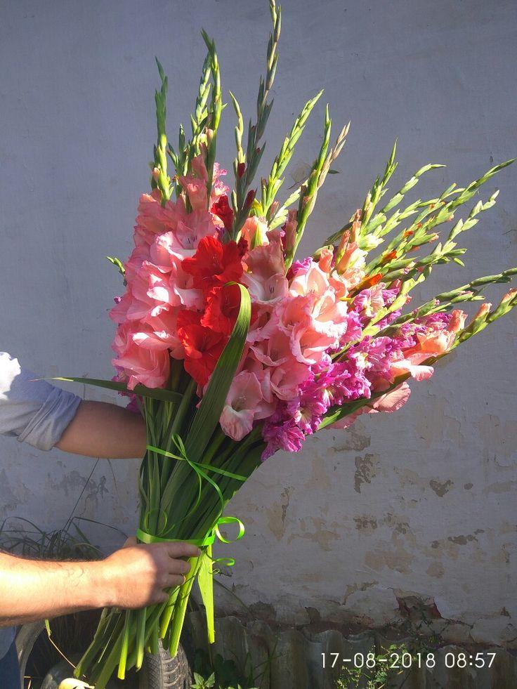 Свадебного букета, букет из длинных гладиолусов купить москва