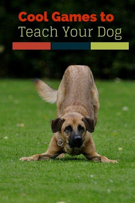 Dog Training Commands Dog Training Secrets Robert Cabral Dog