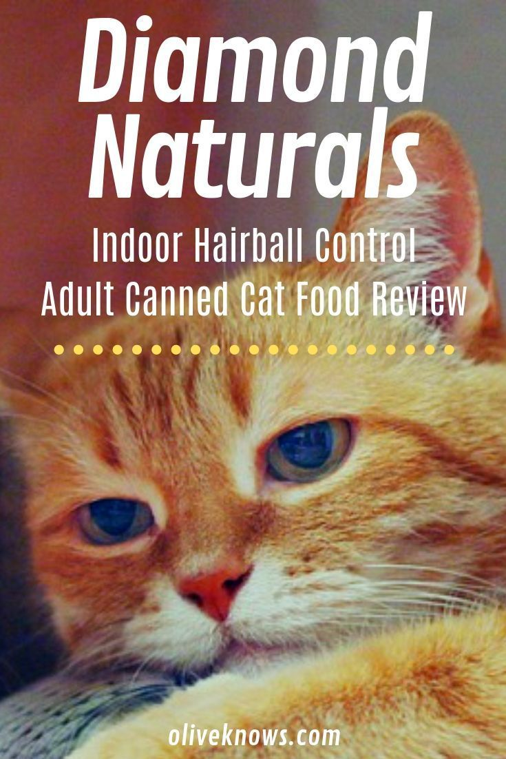 Diamond Naturals Indoor Hairball Control Adult Canned Cat Food Review All About Pets Canned Cat Food Cat Food Best Cat Food
