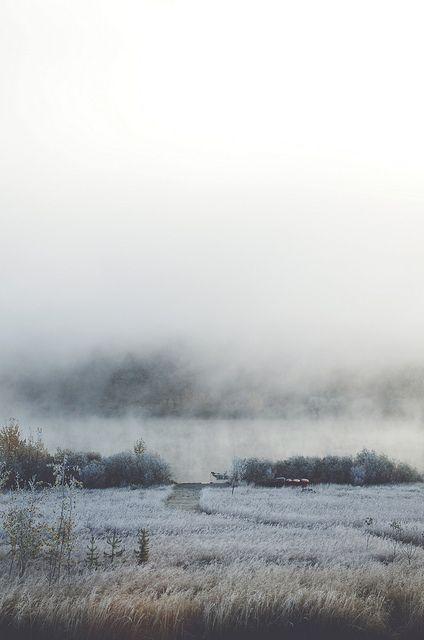frosty mornings by Tasha Maríe, via Flickr