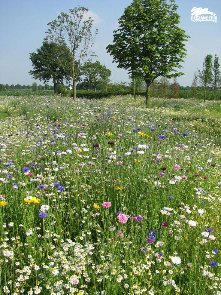 Bloemenweide landschapstuin Breda