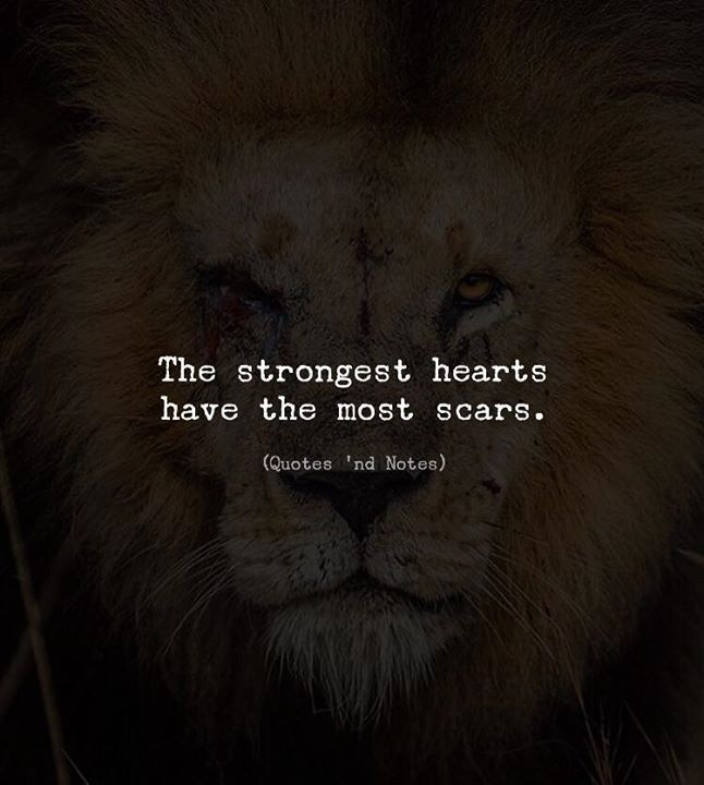 Positive Quotes : The strongest hearts have the most scars..