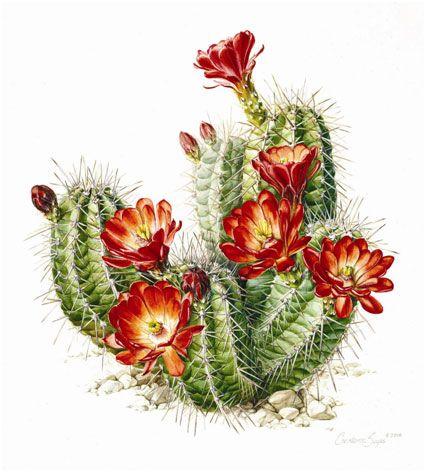 cactus watercolor - Google Search