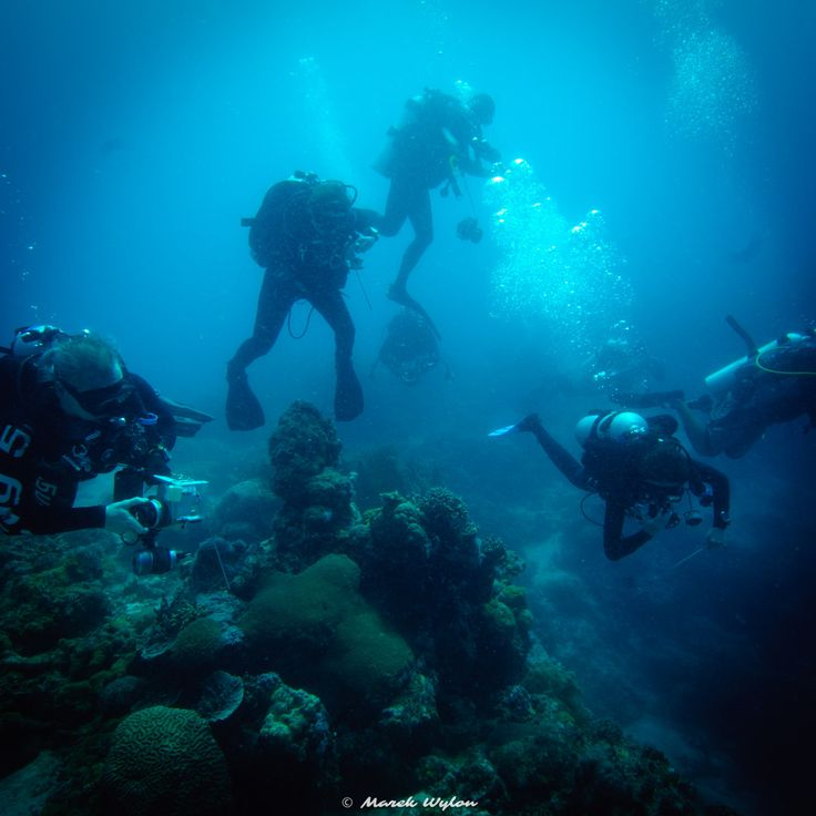 Divers   Thubbataha Reef   2012.04.23  Title: Divers Location: Thubbataha Reef Camera: NIKON D300 Lens: undefined Settings: 1/100 f/11 ISO200 Housing: Subal ND300 Strobes: 2 x Subtronic Pro270  http://marek.wylon.com