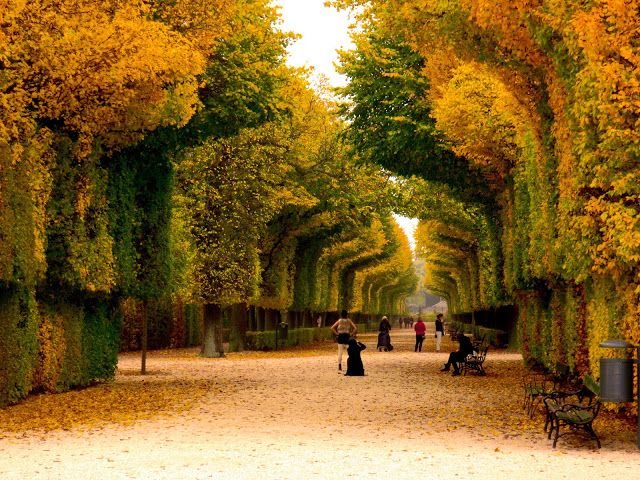 Tree Tunnel - Schonbrunn Gardens - Vienna - Austria