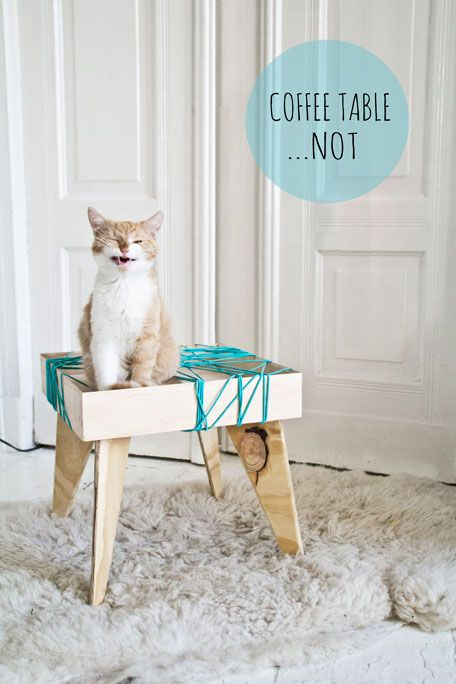 coffee table...not !  A coffee table which can't be used as a coffee table because of the use of elastic cord #ginger #cat #design #furniture #table #interiordesign #interiors #white #blue