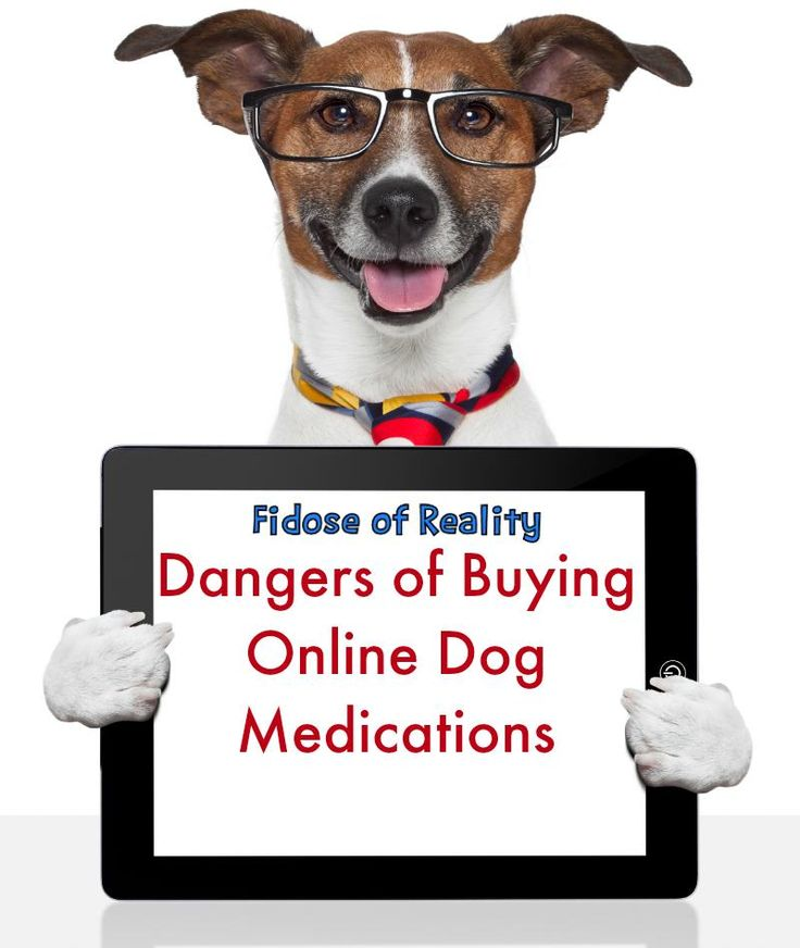 Dangers of Buying Online Dog Medications - Fidose of Reality