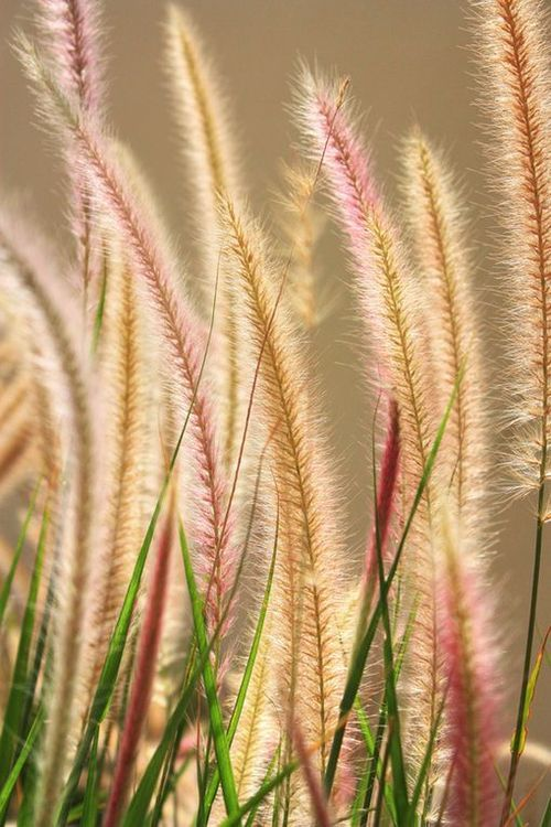 cat's tails - do this in water color