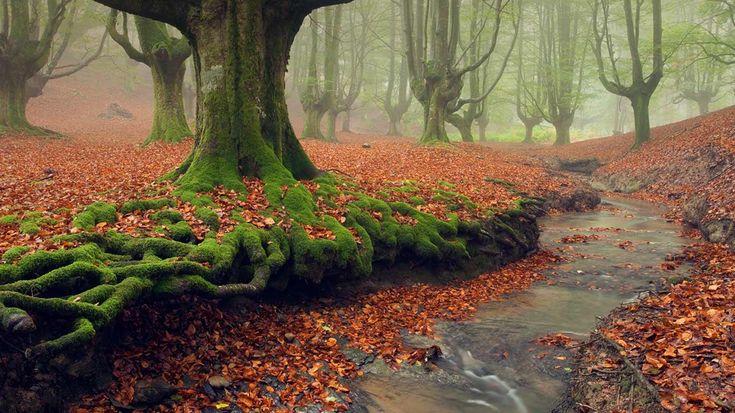 El Parque Natural de Gorbea es un espacio protegido que se encuentra situado entre las provincias de Álava y Vizcaya en el País Vasco (España), siendo el mayor Parque natural del País Vasco con una superficie de 26.007 hectáreas.