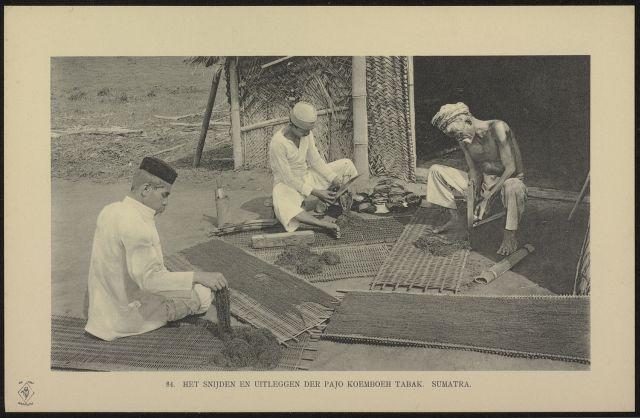 het-snijden-en-uitleggen-der-pajo-koemboeh-tabak-sumatra-1911
