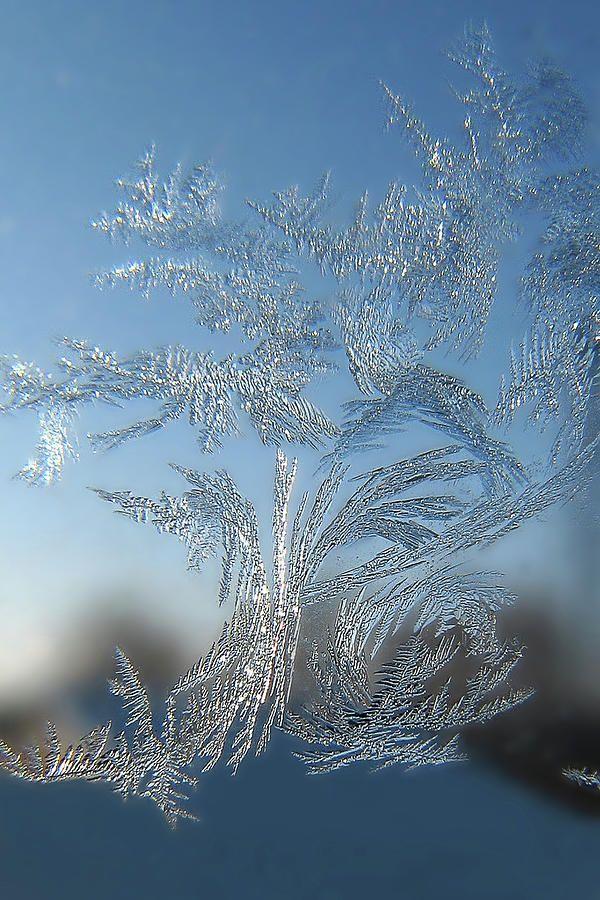 Frost Tree by Victor Kovchin