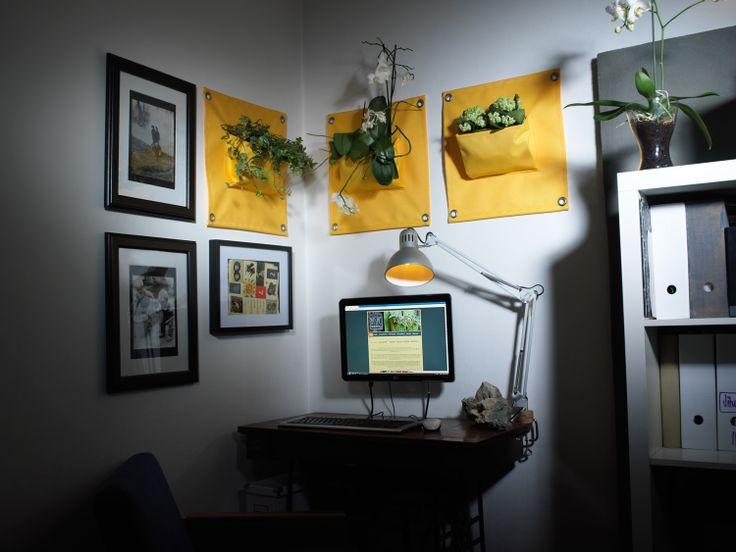 Použití kapsářů na květiny v interiéru