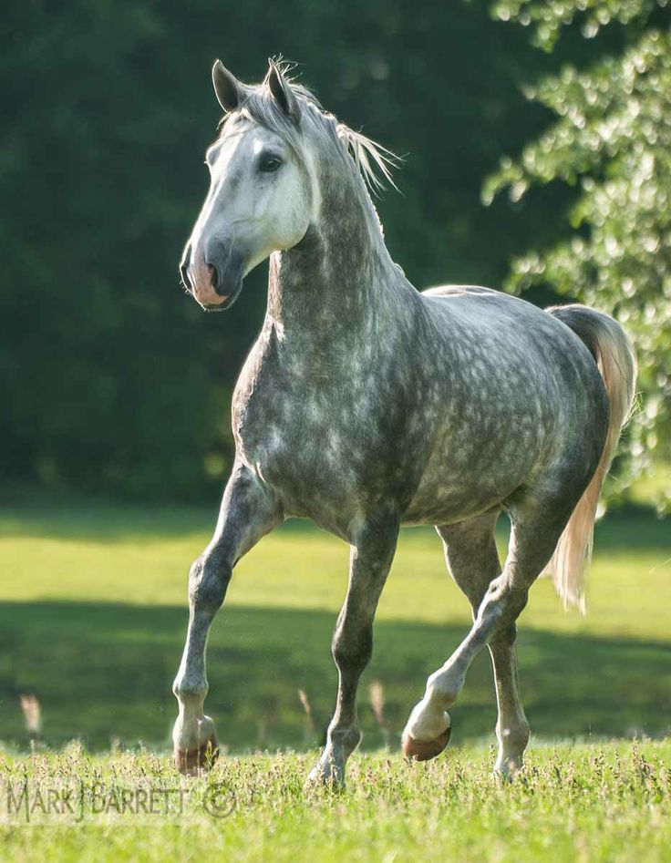 Im White Blizzard. But you can call me Blizzard for short. Im a pretty young mare looking for a mate. Im fast and smart.