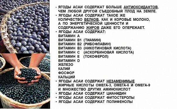 Ягода Асаи (Acai Berry) - уникальный супер-фрукт, богатый антиоксидантами и витаминами, произрастающий только в Бразилии у берегов Амазонки.