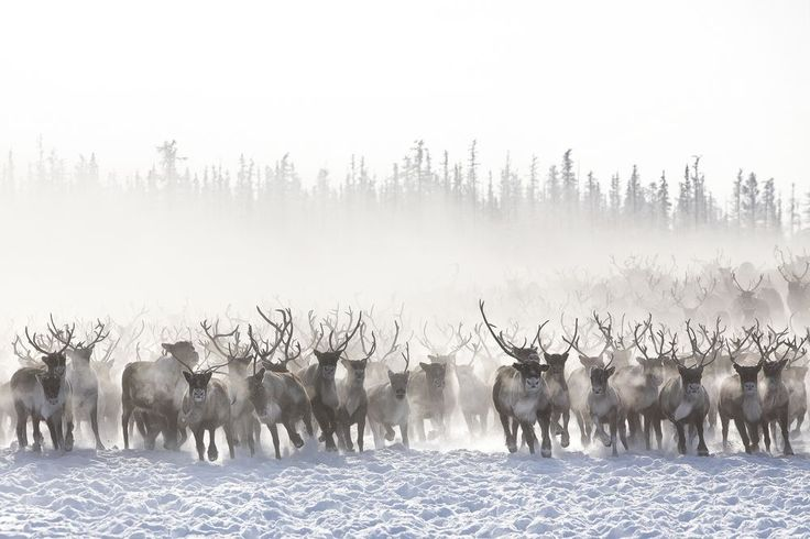 Photo by Alessandra Meniconzi via National Geographic