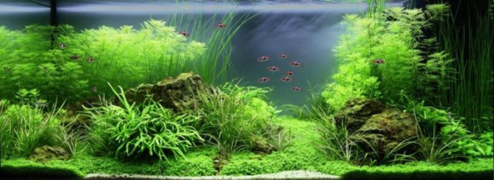 Paysage aquatique n 79 economique aquascapes pinterest for Plante aquarium eau douce