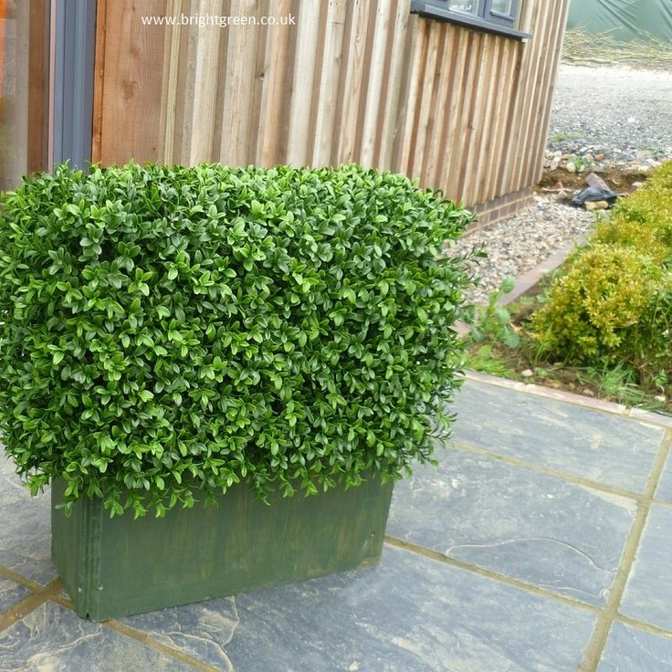 1000+ ideas about Boxwood Planters on Pinterest   Planters ...