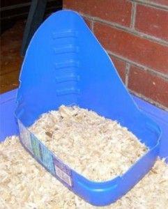 Perché il coniglio fa i bisogni fuori dalla lettiera?