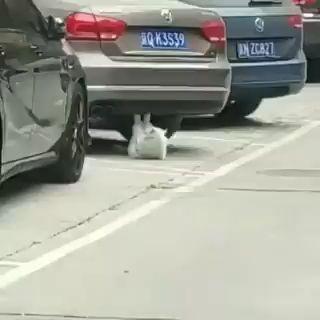 ¡Mira este #Gato funcionando!