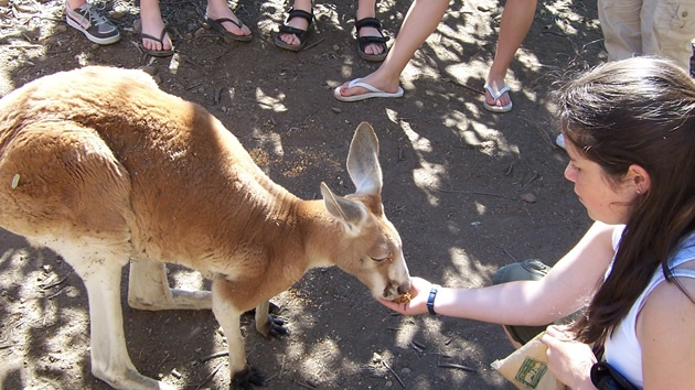 Man I wish I had a kangaroo as a pet.#P2Ppacking