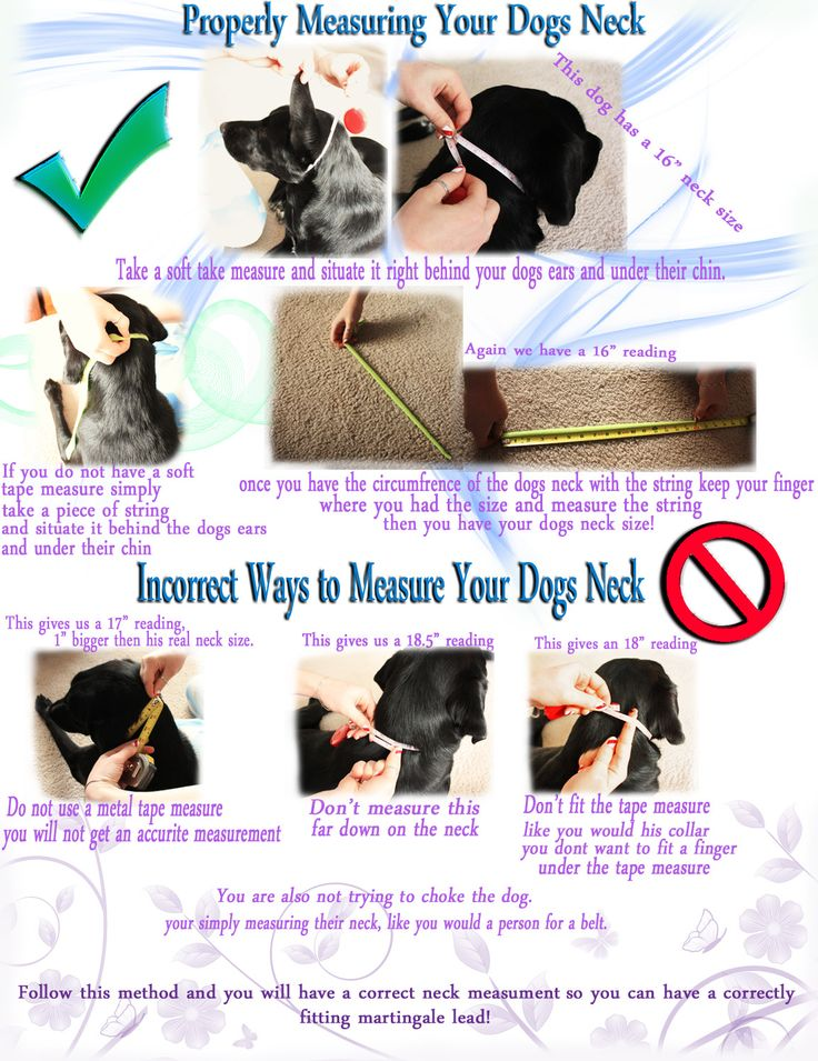 200 besten Barkin\' Bags and Dog Accessory Ideas Bilder auf Pinterest ...
