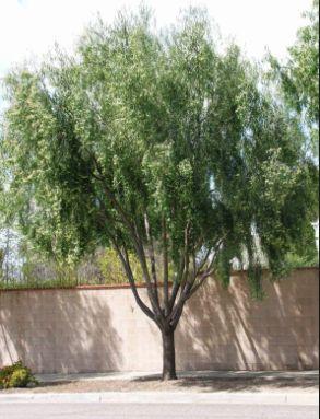 Desert Landscaping Front Yard Drought Tolerant