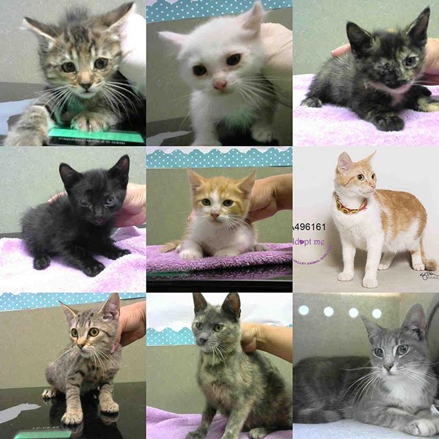 The Shelter Is Flooded With Cats And Kittens In Immediate Need Of Homes So They Wont Lose Their Lives These Are Just Cats And Kittens Animal Shelter Animals
