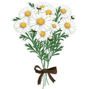 マーガレットの素敵な花束イラストアイデア