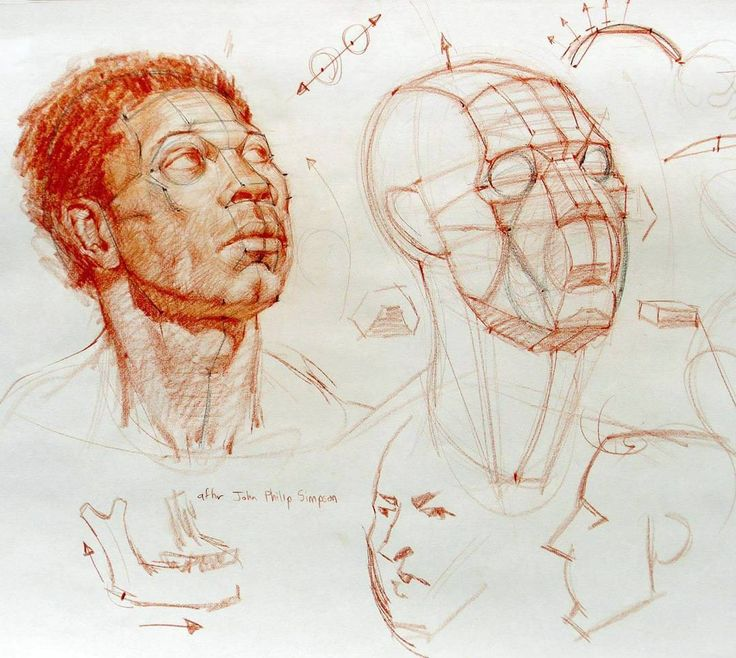 """An example of the kind of structural analysis I'll be teaching in Spain this April. Link in bio to sign up! #art #drawing #anatomy #head #structure…"""