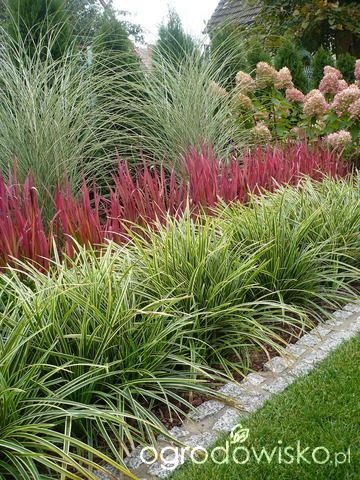 17 best images about garden border ideas on pinterest for Ornamental grass border