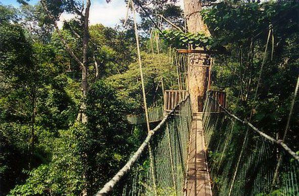 Canopy Walk - Taman Negara - Maleisie