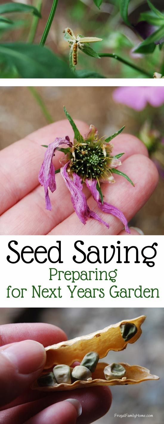 Save some money by saving your own seeds from flowers and plants in your garden.