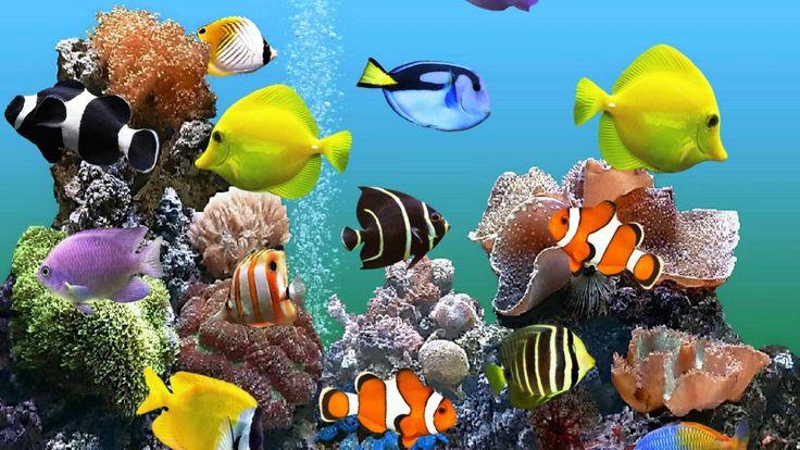 Картинки живые на телефон аквариум