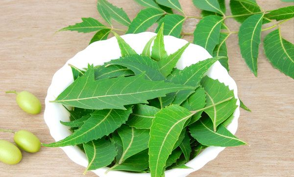 Any kind of ailment caused on face or skin is called 'Dermal problems'. Like pimples, psoriasis and eczema etc. We can cure such ailments using neem
